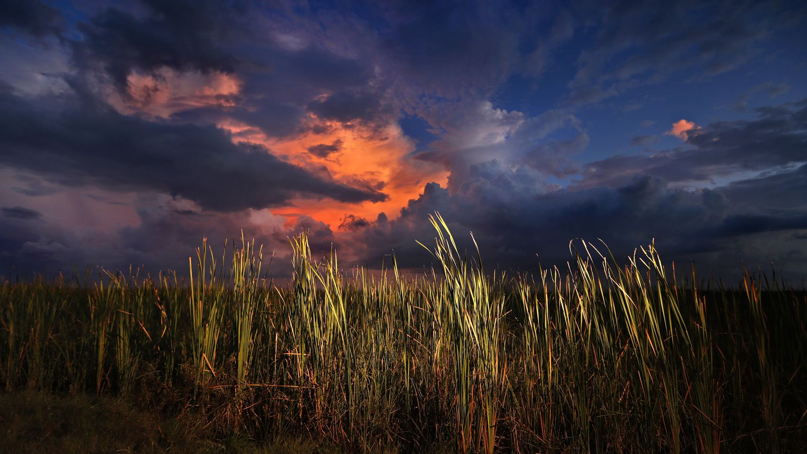 A clearing late-day storm adds drama in the sky over a sawgrass prairie in Everglades National Park. (AP Photo/Robert F. Bukaty)