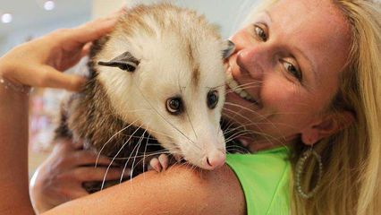 Cuddly, housetrained Barley is not your backyard possum