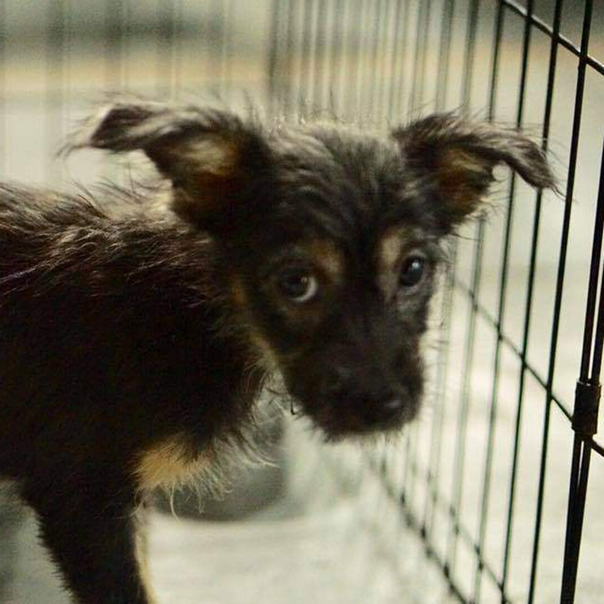 Tampa Bay shelter rescues 111 animals from Puerto Rico