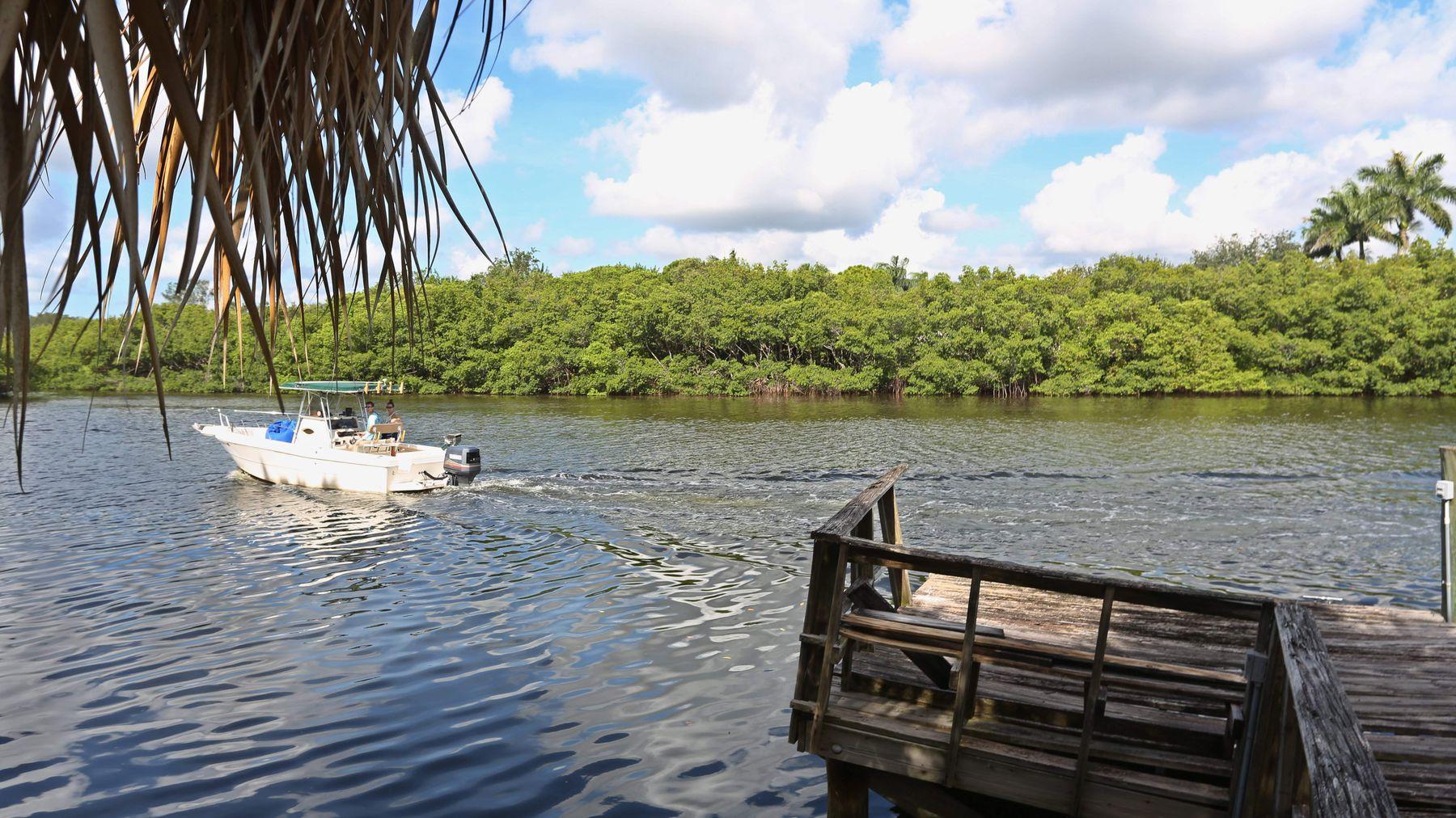 Placido Bay Mangroves
