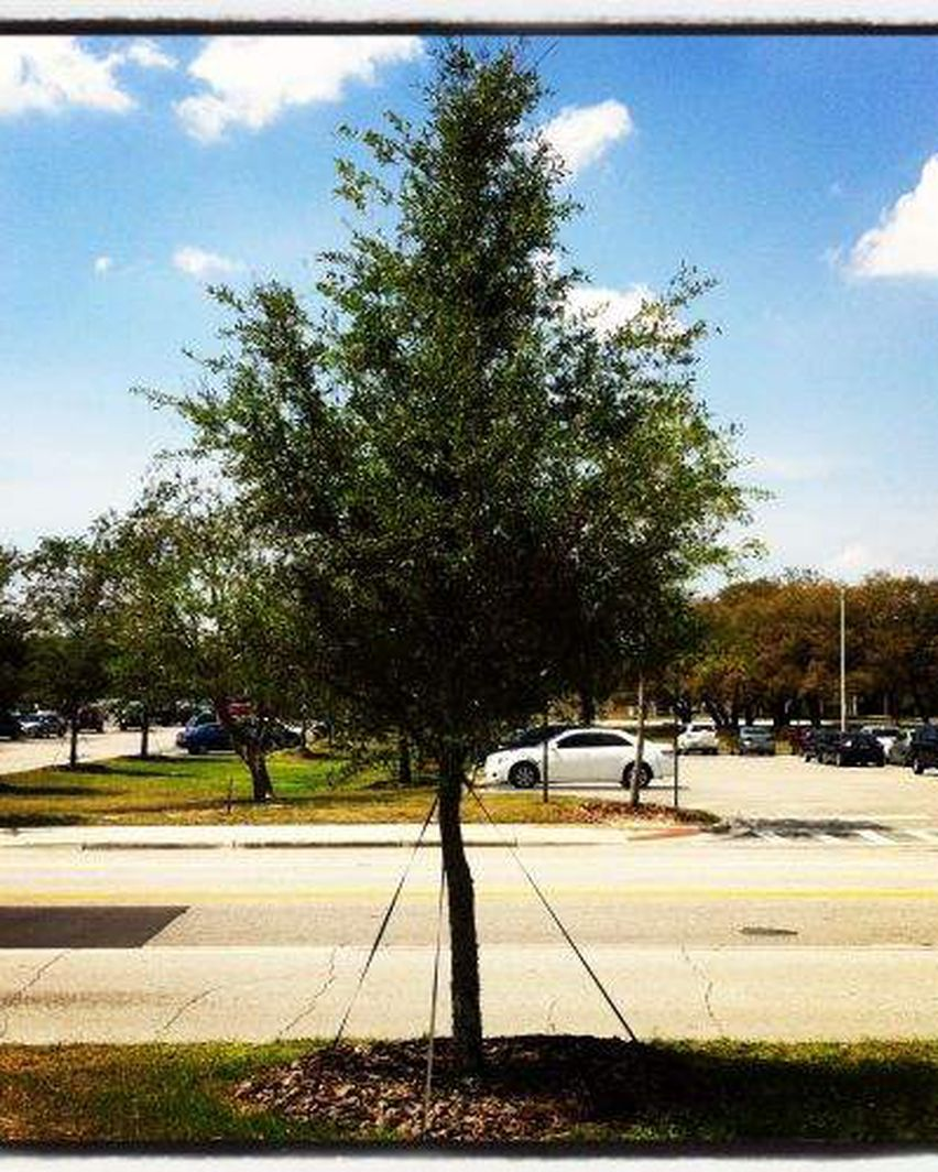 Florida Arbor Day Money Does Grow On Trees