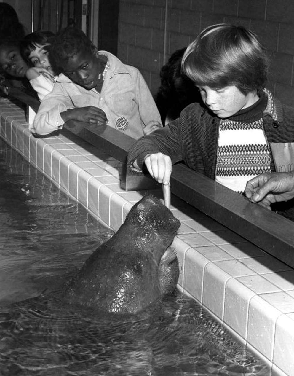 Children play with Snooty the manatee at the South Florida Museum in 1976. [Karl E. Holland | State Archives of Florida]