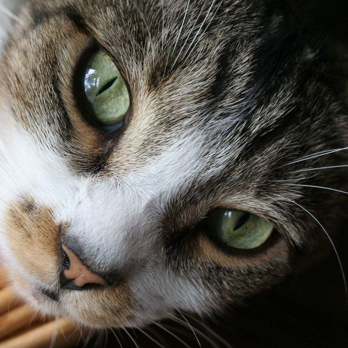 October 29th Is National Cat Day Here Are 14 Little Known Facts About Our Feline Friends W Video