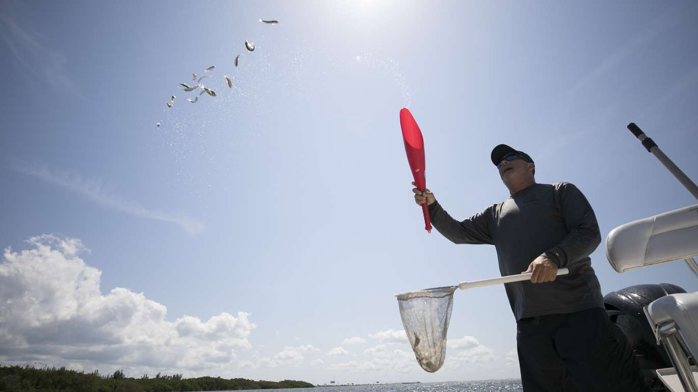 CHRIS URSO   Times Captain Jay Plastic throws bait fish into the water while fishing in Old Tampa Bay near Cypress Point Park during a fishing charter offered by The Godrey Hotel & Cabanas Tampa Friday, April 27, 2018. The hotel offers a unique fishing charter which provides a chance to catch, cook and eat local fish.