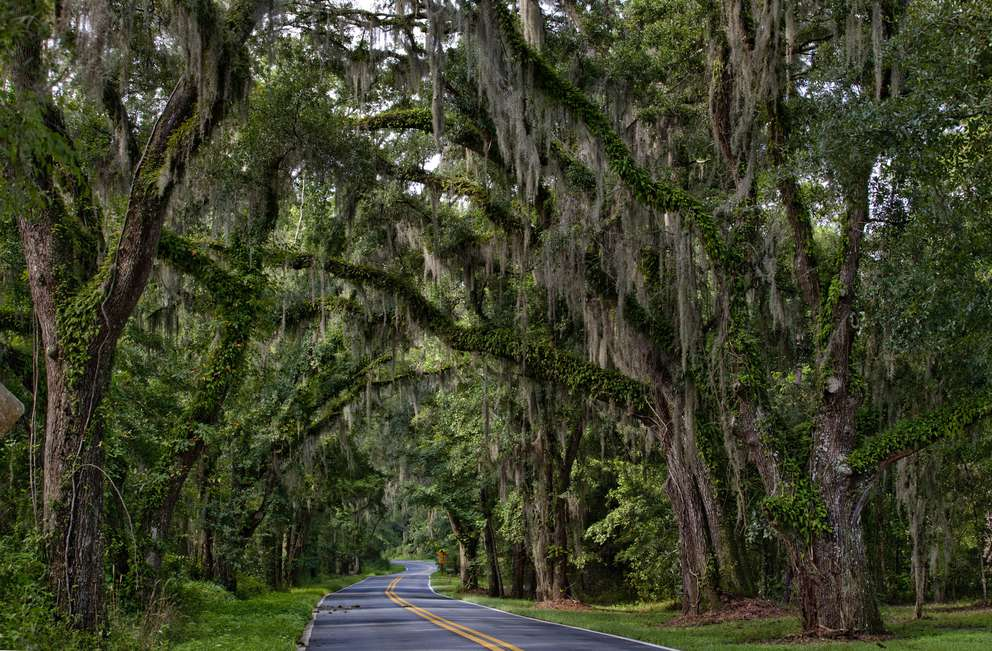 A drive east from town on Miccosukee Road will treat visitors to one of Tallahassee's canopy roads. Times (2010)