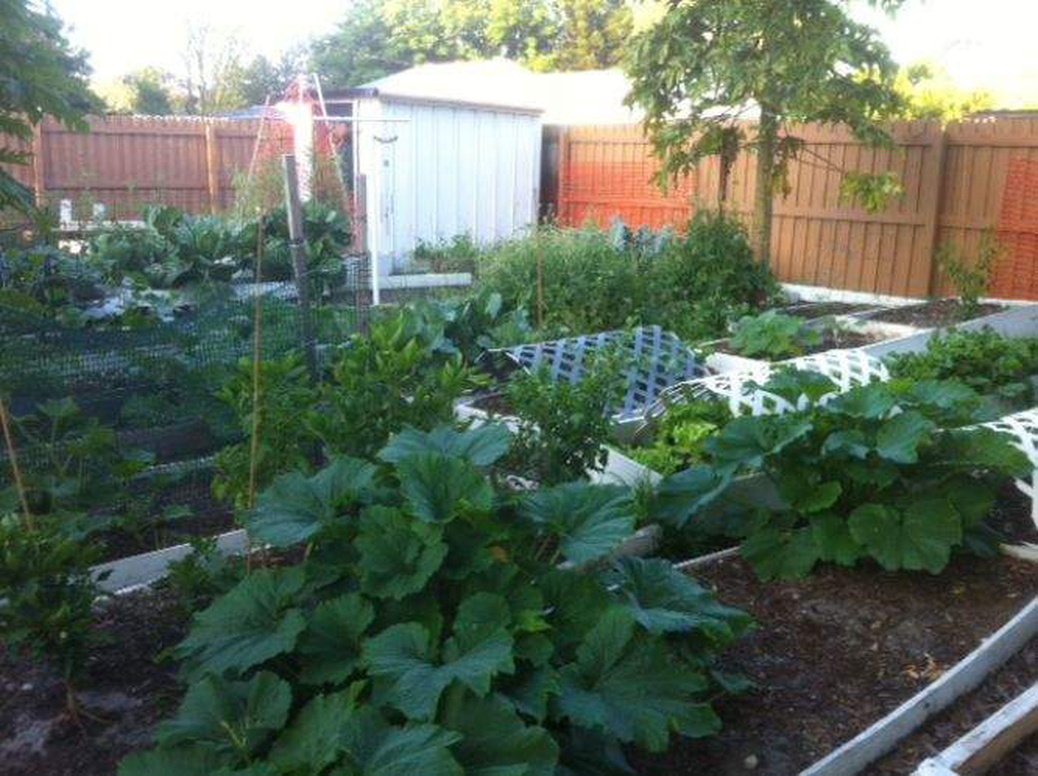 Yes You Can Grow A Garden Of Vegetables In Florida Here S How