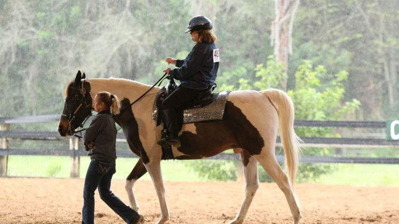 Pepin Land Deal Hits Roadblock But Future Of Equestrian