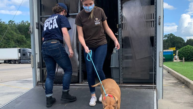 Animals displaced by Hurricane Sally sent to Tampa Bay for adoption