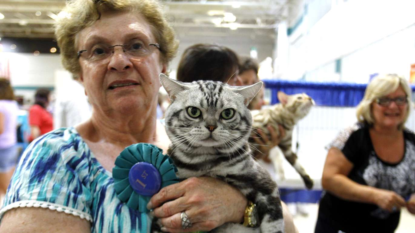LUIS SANTANA   Times Carol Rothfeld poses with her cat Solo who just won best all breed cat in ring 4 during the Largo show. Solo is a 2 time international Champion in the American Shorthaired category. The Skyway Cat Club of Tampa Bay hosts their All Breed Cat Show chartered by The International Cat Association (TICA) at Minnreg Hall in Largo. Over 140 cats competed in the weekend long event with hundreds more attending. [Sunday, August 21, 2016] [Photo Luis Santana   Times]