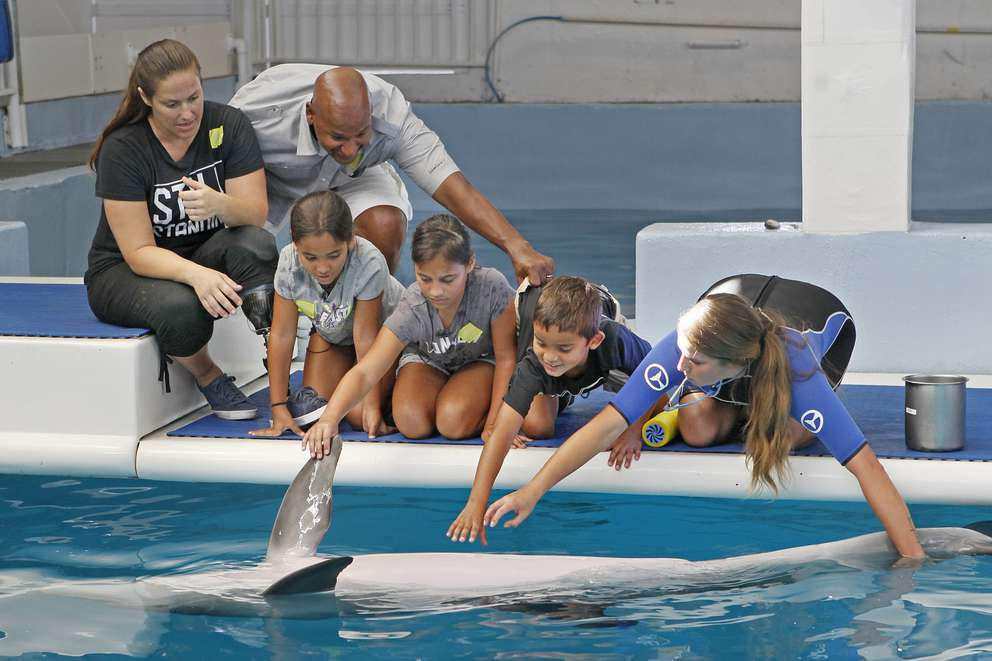 Children touch Hope the dolphin at the Clearwater Marine Aquarium in 2018. JIM DAMASKE | Times