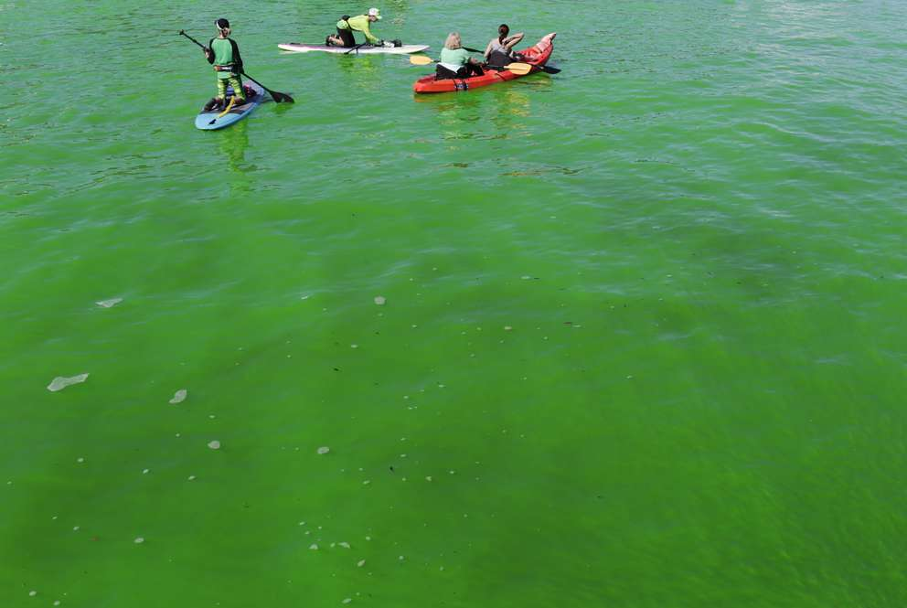 GABRIELLA ANGOTTI-JONES | Times Kayakers and paddlers hang out on the Hillsborough river during the Mayor's River O'Green Fest at Curtis Hixon Park on Saturday, March 17, 2018 in Tampa, FL. The Hillsborough river was dyed green with non-toxic, biodegradable dye Saturday morning in celebration of St. Patrick's day. Festival-goers not only watched the river turn green, but also enjoyed live music, crafts, and beer.