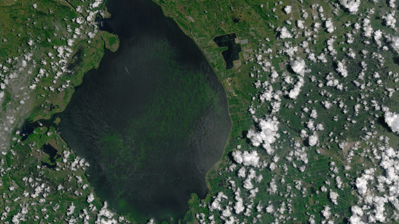 In early May 2016, an algae bloom grew to cover 85 square kilometers (33 square miles) of Florida's Lake Okeechobee. The conditions that gave rise to the bloom have been blamed for affecting water quality downstream all the way to the Atlantic Ocean.