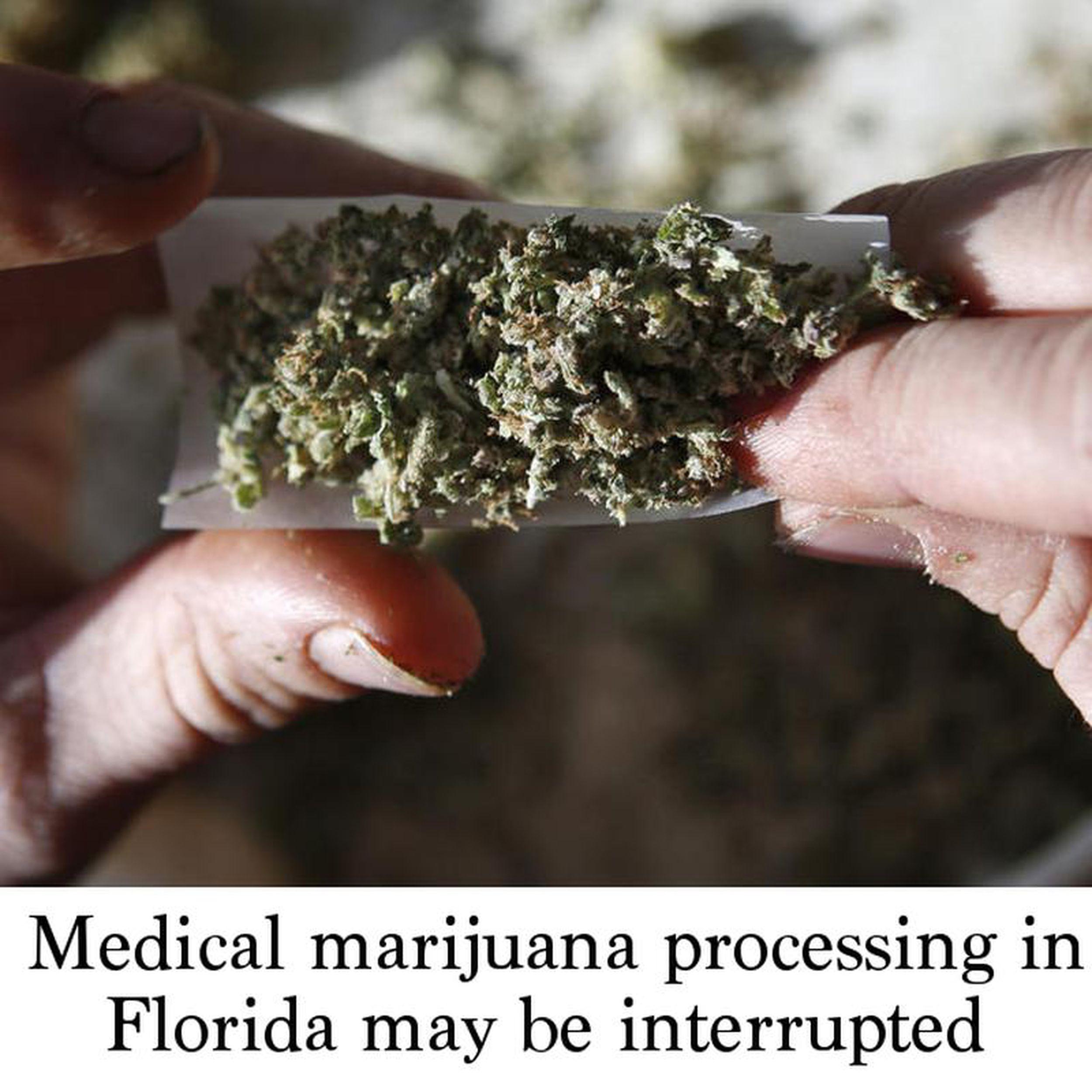 Medical marijuana processing in Florida may be interrupted