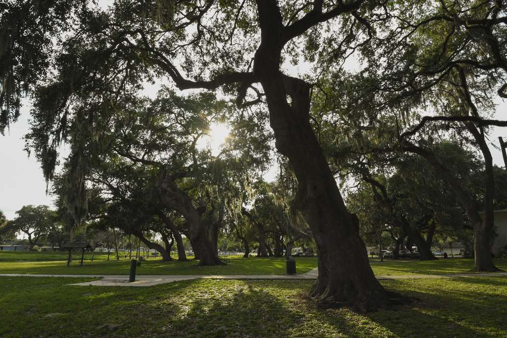 ALLIE GOULDING   Times Oak trees provide shade at Zephyr Park and Waterplay on Thursday, April 25, 2019 in Zephryhills, Fla.