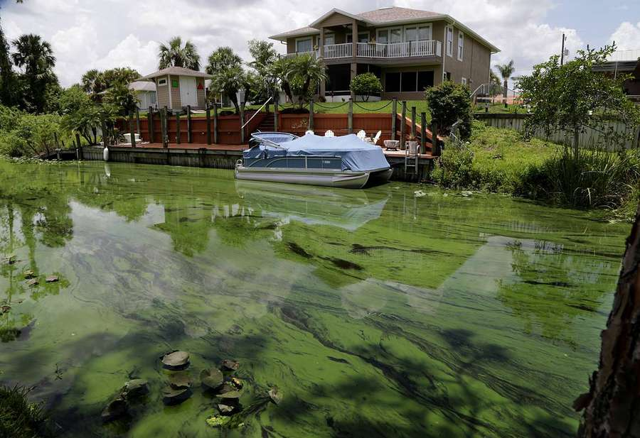 It S Kind Of Horrific Toxic Algae Bloom Threatens Florida Coasts