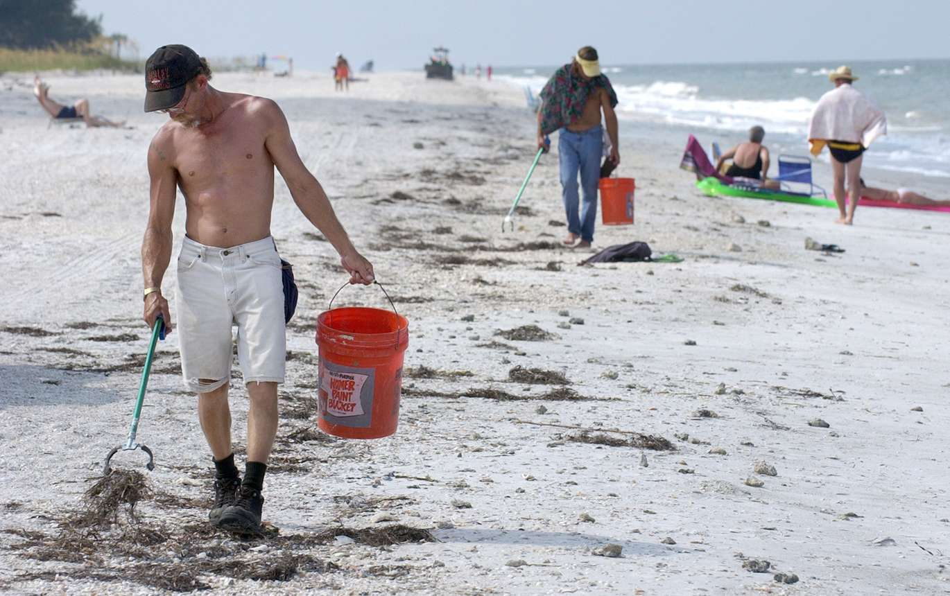 A Look Back At The Red Tide Outbreak In 2005 Tampa Bay Times