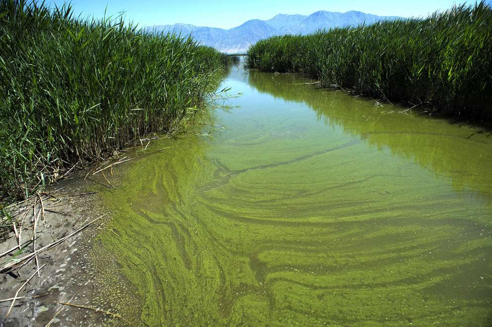 Five things to know about blue-green algae. (Yeah, it's ...