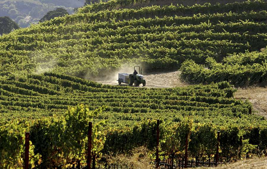 A worker drives a tractor through a vineyard in California's Napa Valley region. The Republican Party of Florida has financed junkets to Napa Valley that included wine tours and an $8,000 dinner tab at California's sumptuous French Laundry restaurant. [Getty Images (2006)]