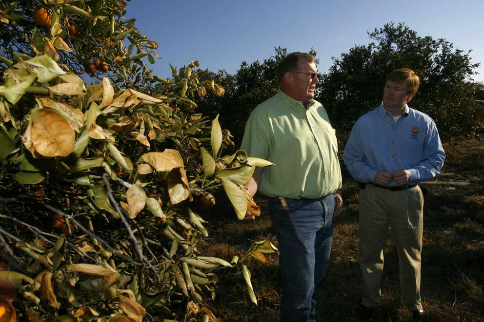 Citrus grower Louis Haverlock of Lou Ross Citrus Inc. in Balm talks with then-U.S. Rep. Adam Putnam about damage to his citrus from three nights of freezing weather. SKIP O'ROURKE, Times Staff Photo