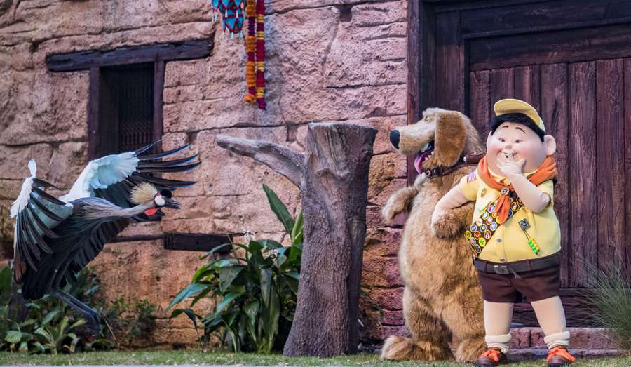 A new bird show featuring Russell and Dug from Disney Pixar's