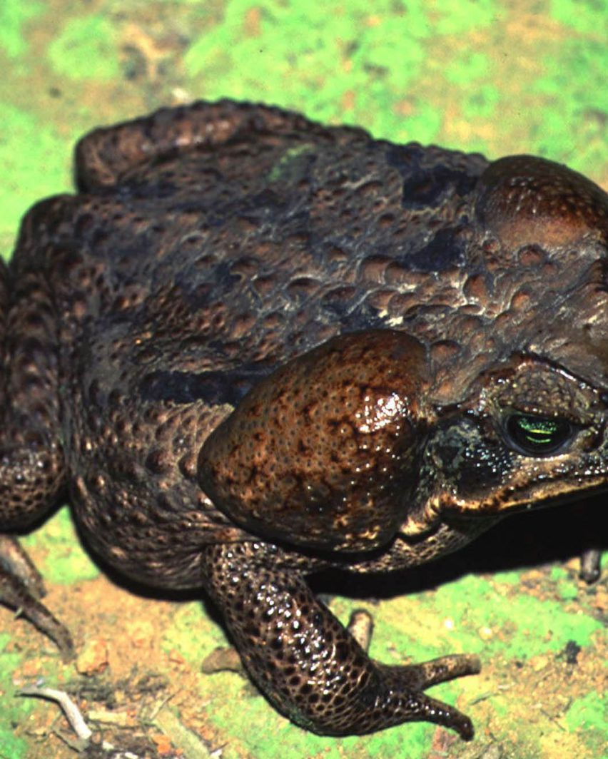 Take It Seriously Tampa Woman Says After Bufo Toad Poisons Her Dog