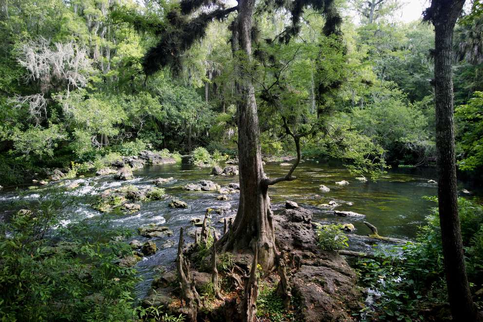 Thonotosassa's Hillsborough River State Park. DOUGLAS R. CLIFFORD | Times