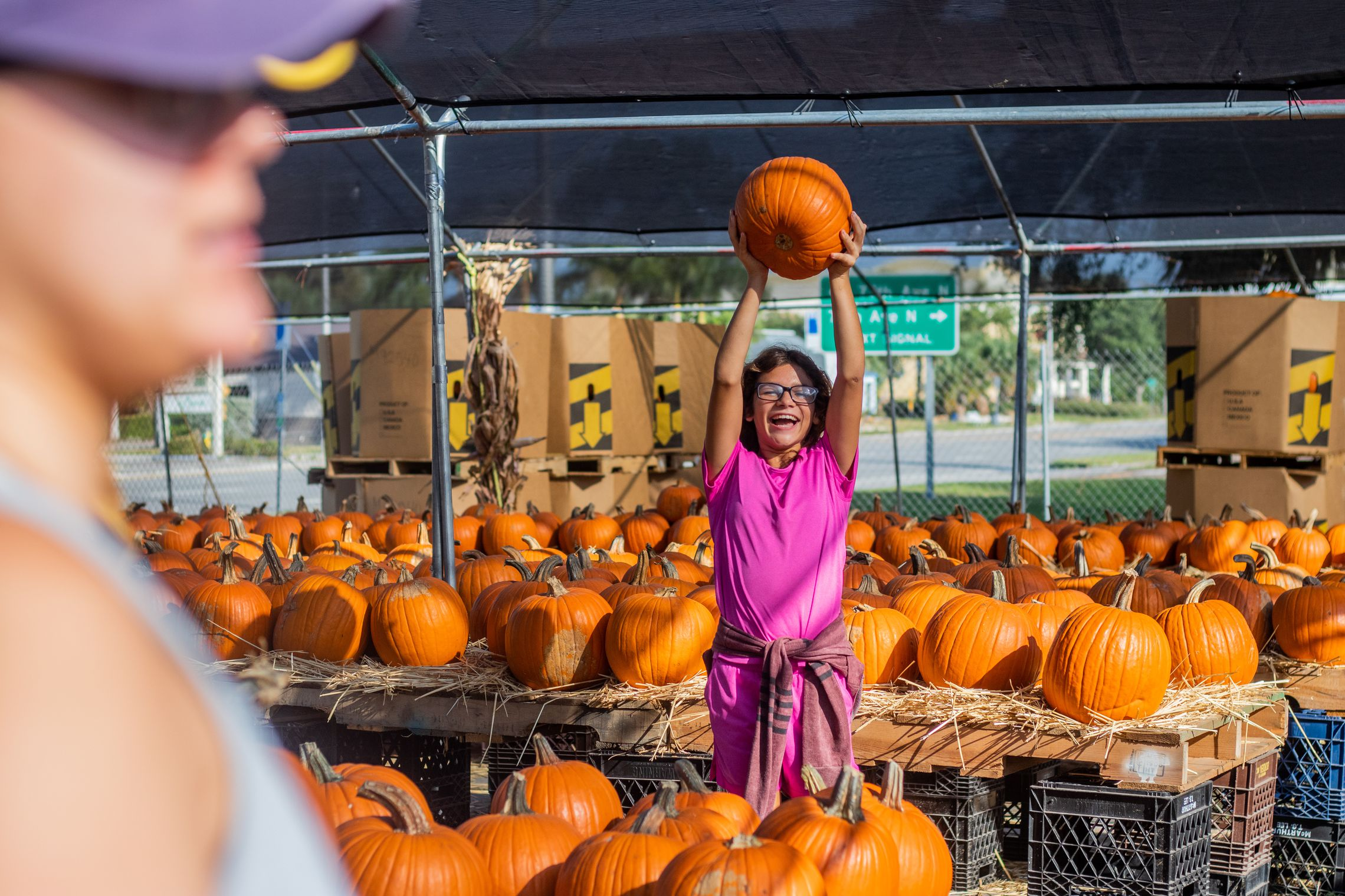 Where To Find Pumpkin Patches In Tampa Bay