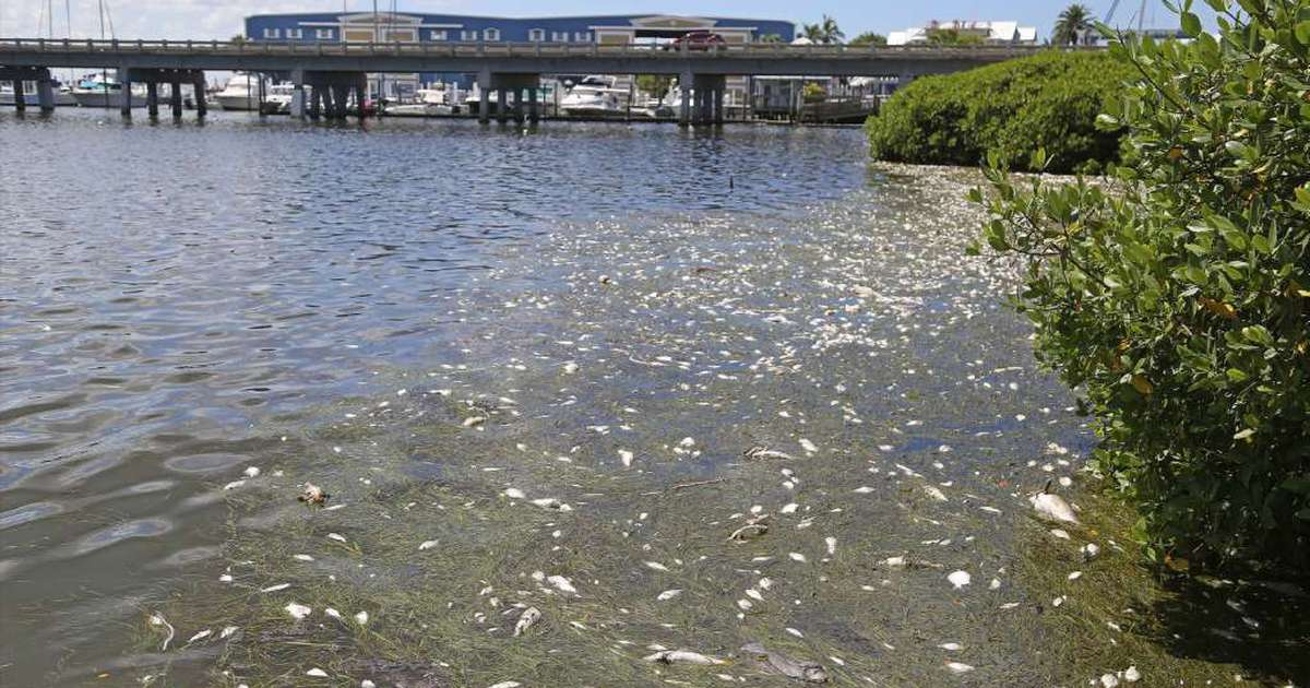 Rick Scott Issues Emergency Order On Red Tide Algae Bloom Tampa