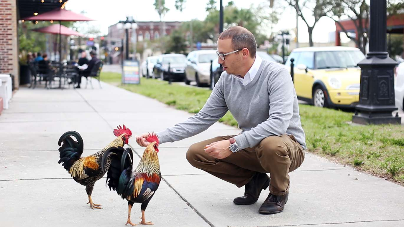 Dylan Breese, 36, who lives in Ybor City found solace caring for chickens after losing his job last year. Over the past several months he's become a fixture in Ybor City by hosting volunteer cleanups in Centennial Park and advocating for chickens through the Ybor Chickens Society. [OCTAVIO JONES   Times ]