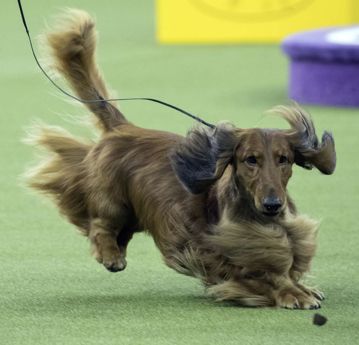 Photo Gallery The Scene At The Westminster Dog Show