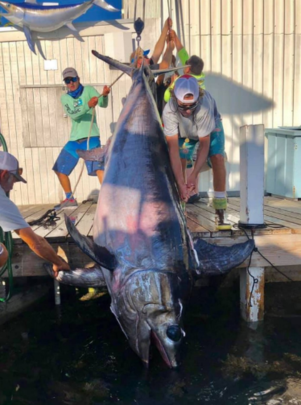 A large swordfish is pulled onto the dock at Bud 'N' Mary's Marina in Islamorada on March 31, 2019. Courtesy of Nick Stanczyk