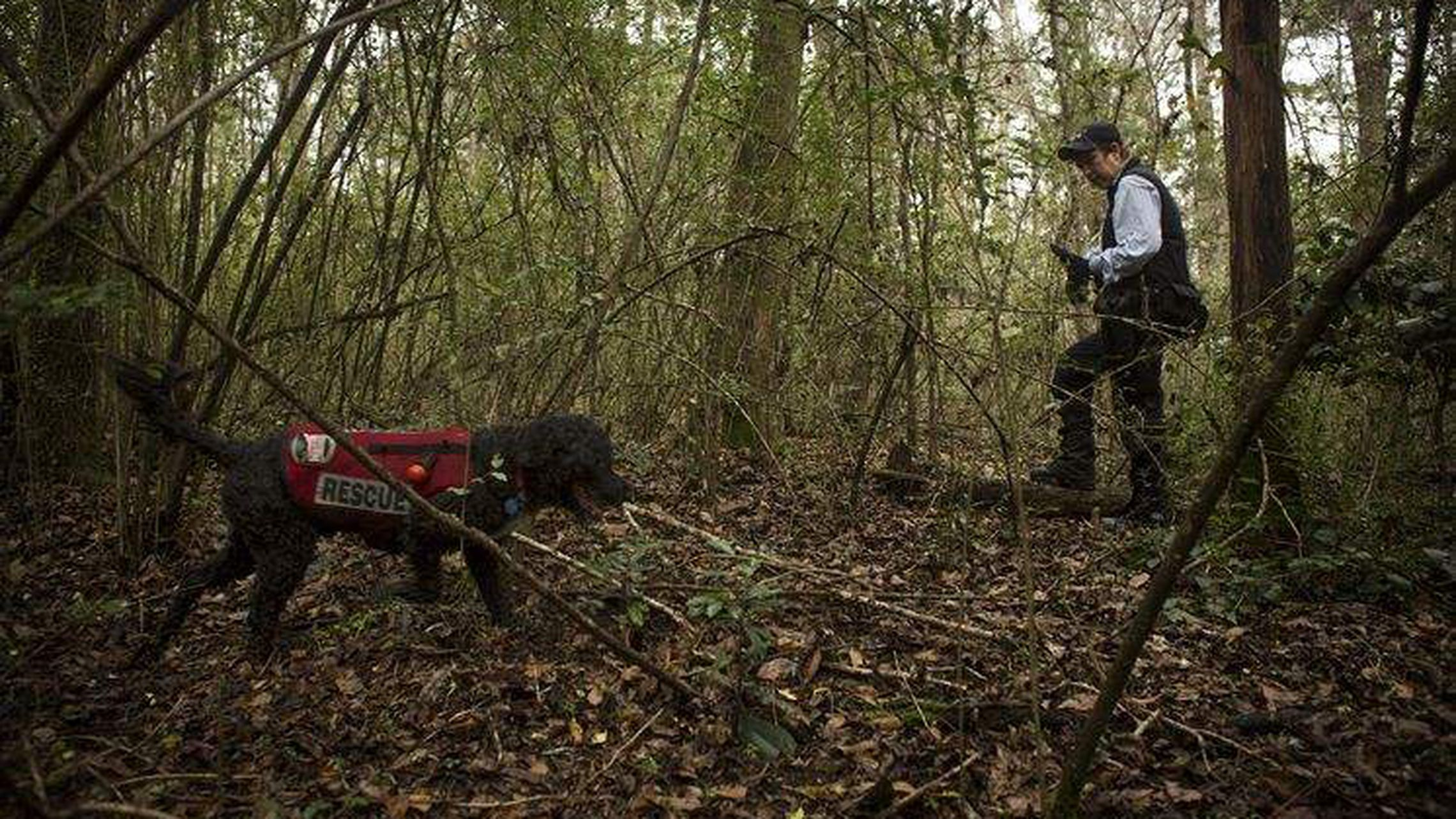 Cadaver Dogs Helping With Search For Bodies At Dozier School