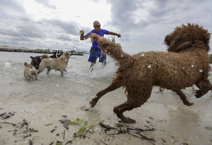 CHRIS URSO | Times Dog trainer and walker, George Gagalis, 68, of Hyde Park prepares to throw a tennis ball as several dogs wait in anticipation near the water's edge Tuesday, May 29, 2018 at the dog park located along Davis Islands in Tampa. Despite projections of torrential downpours and flooding, a low-pressure vacuum sucked up some dry air, choking Albertos rain engine and steering it away from Tampa Bay.