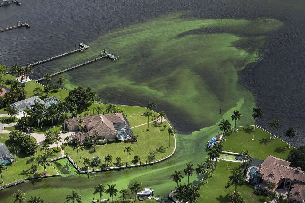An aerial photo shows blue-green algae enveloping an area along the St. Lucie River in Stuart. [Greg Lovett | Palm Beach Post via the Associated Press (2016)]