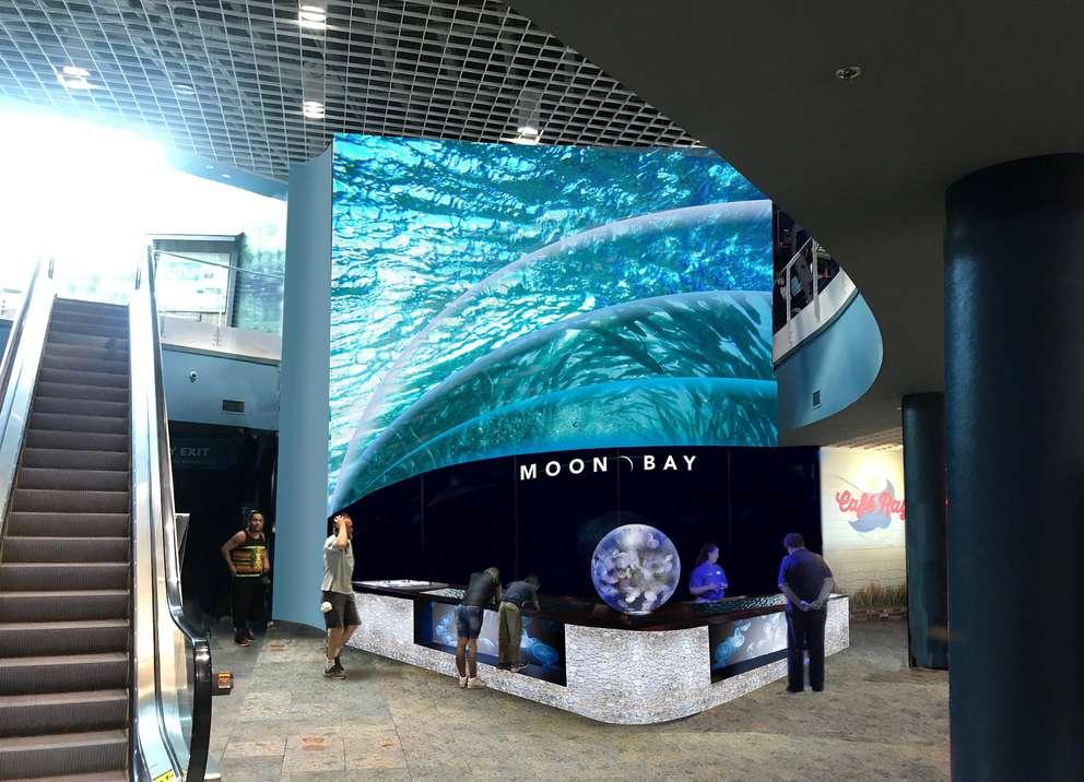 The new Moon Bay exhibit at the Florida Aquarium will open June 8. Courtesy of Florida Aquarium